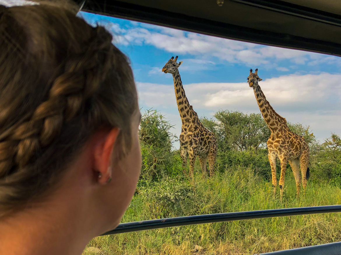 Close encounter with giraffes