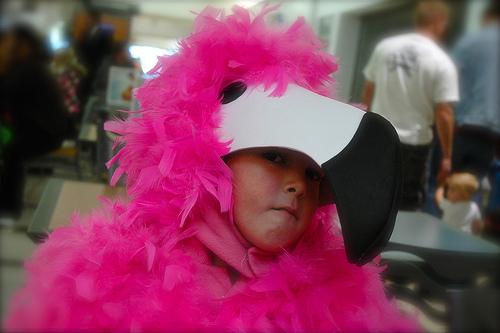 Apprehensive Flamingo
