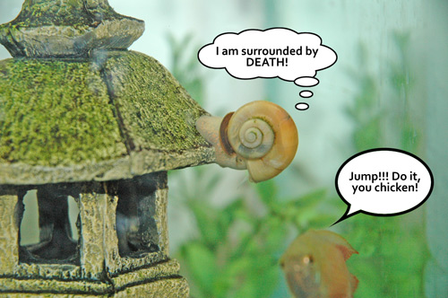 Snail opts to commit suicide... due to peer pressure.