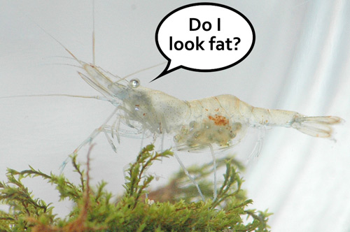 Do I look fat?
