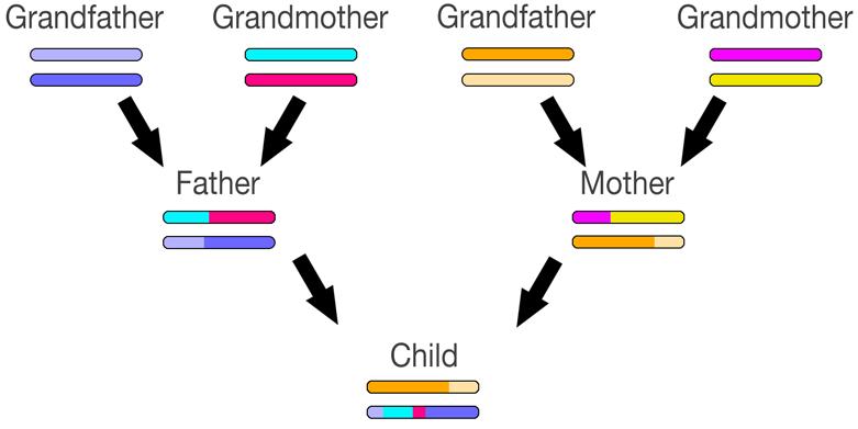 Genetic Genealogy using GEDmatch - An Absolute Beginners Guide